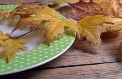 Plat et feuilles automnales Photographie stock