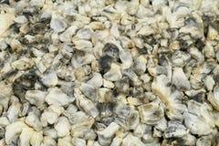 Plat mexicain de champignons de maïs de Cuitlacoche Images libres de droits