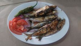 Plat of Moroccan grilled Sardines Royalty Free Stock Image