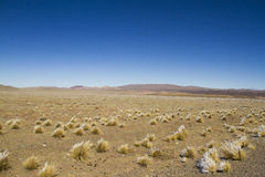 Platô vasto nos Andes Imagens de Stock
