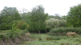 Plata del árbol de abedul que ella espera en el borde del bosque 1 fotos de archivo libres de regalías