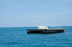 Plataform with birds stock images