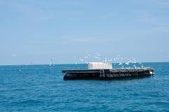 Plataform com pássaros Imagens de Stock