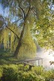 Plataforma de la pesca bajo árbol Fotos de archivo