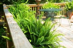 Plataforma de madeira com Ferns imagem de stock
