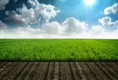 Plataforma de madeira e campo de grama fresco Foto de Stock
