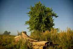 A plataforma de madeira no sol da manhã Fotos de Stock Royalty Free