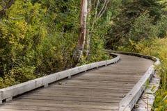 Plataforma de madera del decking Imagen de archivo