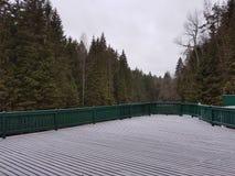 Plataforma na floresta Fotografia de Stock