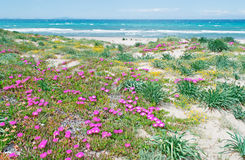 Platamona beach in spring Stock Images