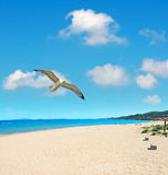 Platamona seagull Stock Images