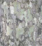Platan, bark of tree, natural camouflage pattern. Sycamore tree other name platan, details of bark. Natural background of tree bark. Natural camouflage pattern royalty free stock image