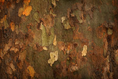 Platan tree bark background Royalty Free Stock Photos