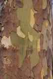 Platane-Baum-Barke Stockfoto