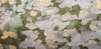 Platanenbarkenbeschaffenheit Lizenzfreie Stockbilder