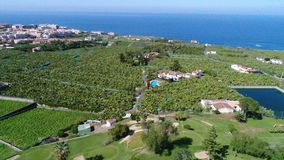Bananas field golf in Tenerife royalty free stock images