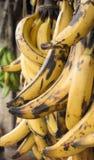 Platanos/Bananen Lizenzfreie Stockfotografie