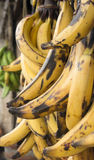 Platanos / Plantains Royalty Free Stock Photography
