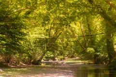 Platanu las Prokopi w Euboea w Grecja z drewnianym mostem Piękny krajobraz Kireas rzeka z lasem obrazy stock