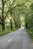 Platanus alley in spring with road Stock Photo