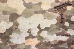 Platanusbaumrinde weg abziehen lizenzfreie stockbilder
