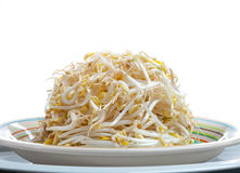 Plate of Bean Sprouts Royalty Free Stock Images
