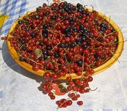 Plate with berries Royalty Free Stock Image