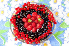 Plate with berries of raspberry, currant, bilberry Stock Image