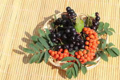 Plate with berries of a red mountain ash and chokeberry Stock Photos