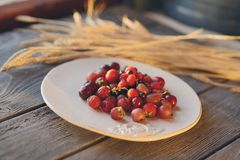 Plate with berries Stock Images