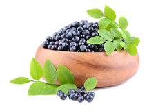 Plate with bilberries Stock Photos