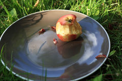 Plate with bitten apple Stock Images