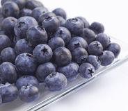 Plate of blueberries Stock Images