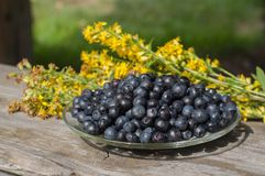 Plate with blueberries is on the table Stock Photography