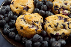 Plate of blueberry muffins Royalty Free Stock Photo