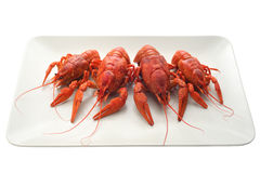 Plate with boiled crawfish isolated. Stock Photography