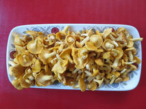 A plate of chanterelles. Freshly picked chanterelles from the forest, served on a plate Royalty Free Stock Photos