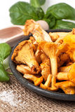 Plate of chanterelles Royalty Free Stock Photography