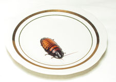 Plate with cockroach on white Royalty Free Stock Photos