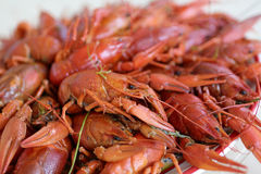 Plate with cooked crayfish Stock Image