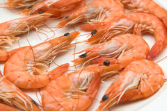 Plate of cooked prawns Royalty Free Stock Images