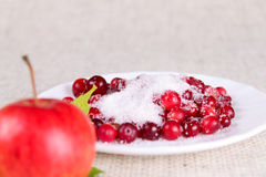 Plate of a cowberry sprinkled with sugar Stock Image