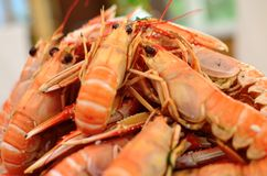 Plate of crayfish Royalty Free Stock Photo