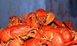 A plate of delicious boiled crawfish royalty free stock photo