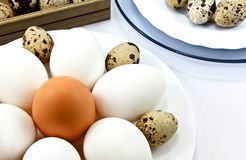 Plate with eggs Royalty Free Stock Photo