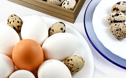 Plate with eggs Royalty Free Stock Image