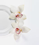 Plate with flowers. White empty plate with two white orhid flowers on white backgraund Royalty Free Stock Photos