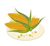 A Plate of Fresh Corn and Kernel Corn. An Illustration of Fresh Ripe Sweet Corns with Grains of Corn on A Beautiful white Dish Stock Images