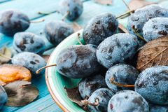 A plate of fresh Damson plums. On a blue rustic wooden background close-up macro Stock Image