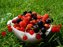 Fresh currant and raspberry fruits. Plate with fresh fruits of currants and berries in grass Royalty Free Stock Photos